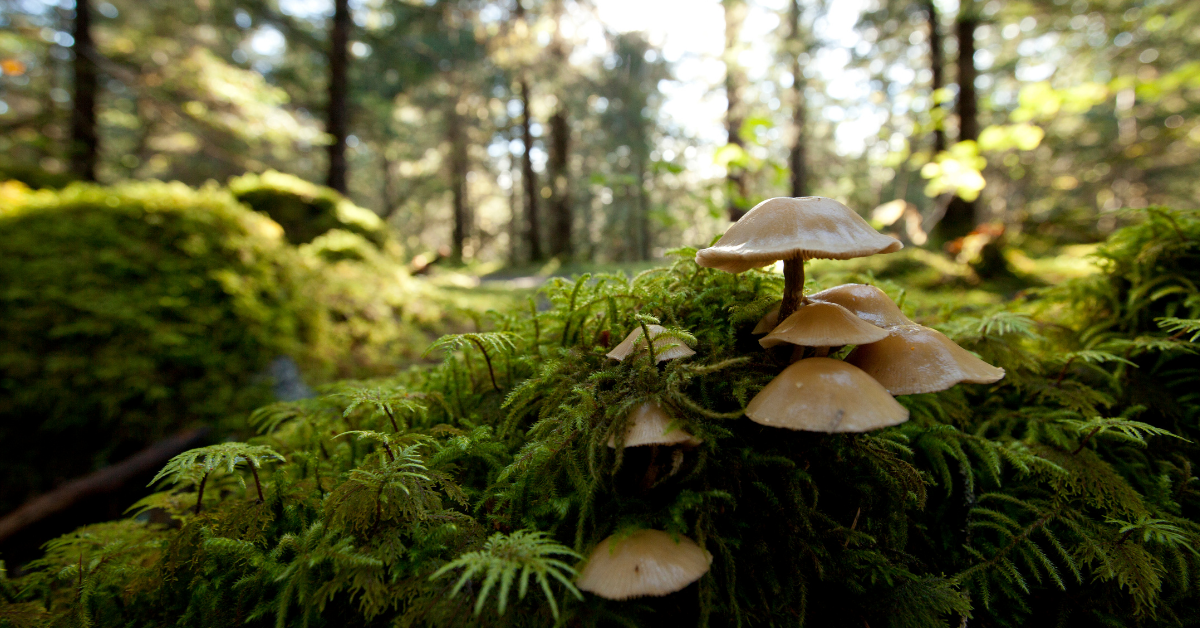 mushrooms and moss on the forest floor