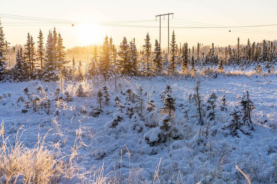 Alaskan forest ecosystem permafrost
