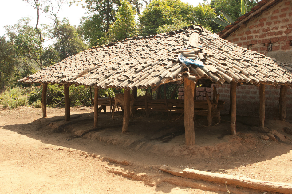 Traditional Cow Shed in India